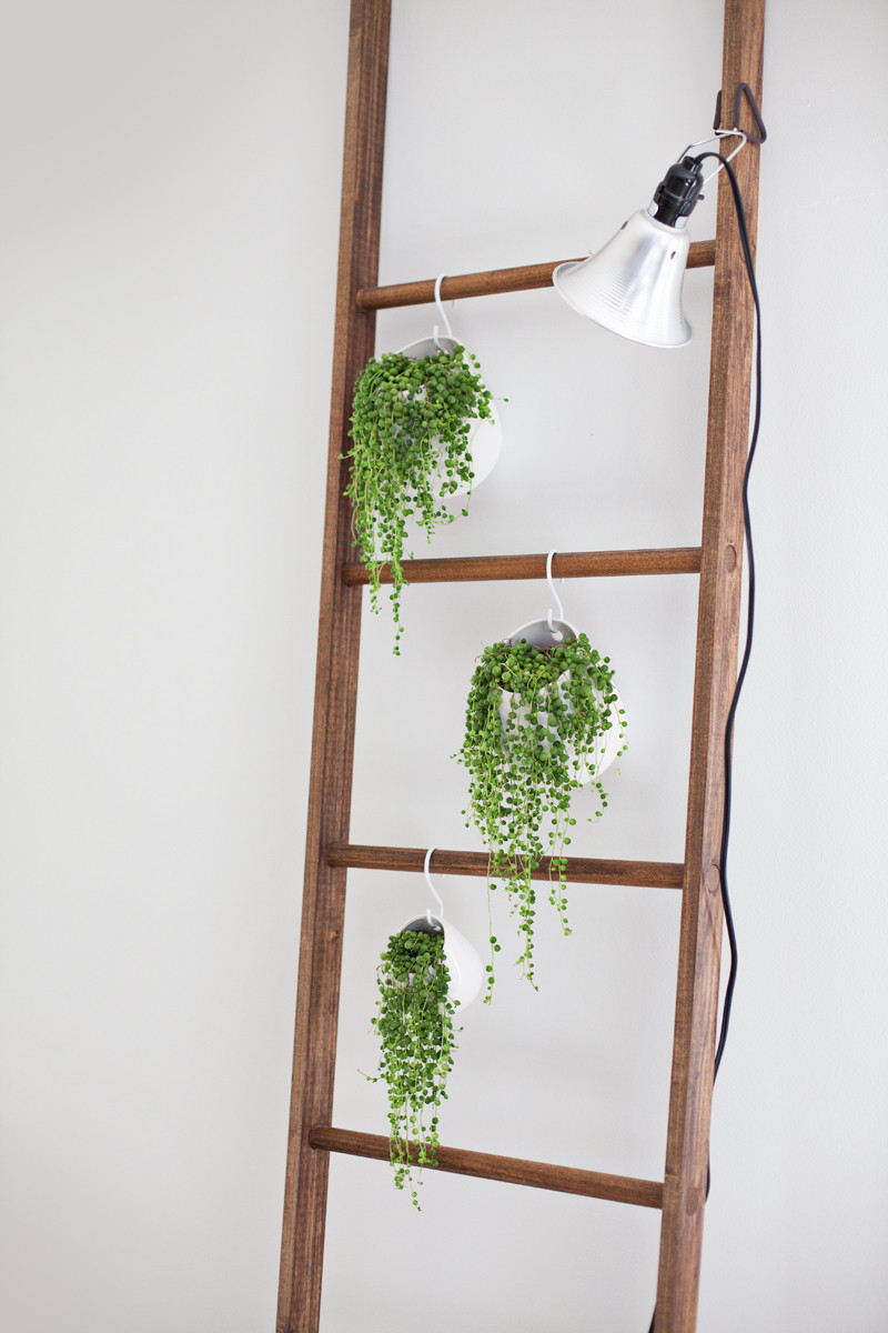 ladder plant display