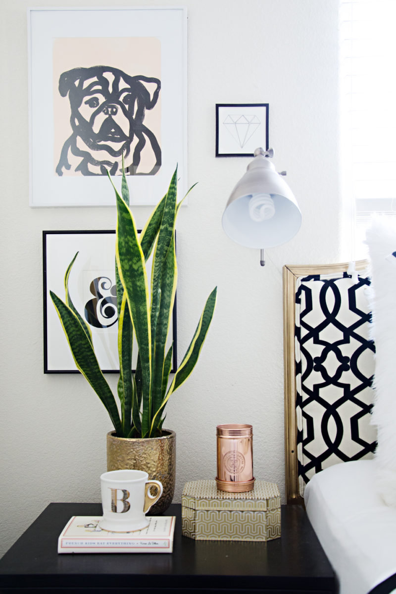 Snake Plant and more plants to purify air