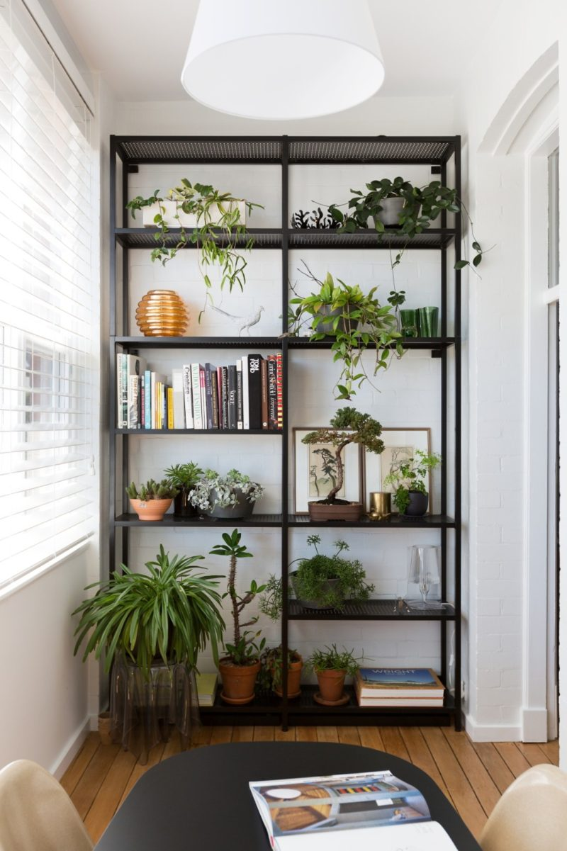 Styling Plants in Bookshelf